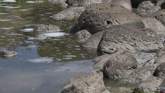 Los microorganismos de suelos mediterráneos son muy resistentes al cambio climático