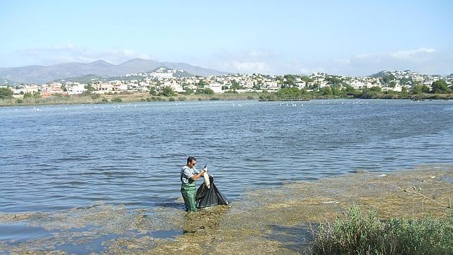 Imagen de uno de los operarios recogiendo un pez muerto en las Salinas de Calpe