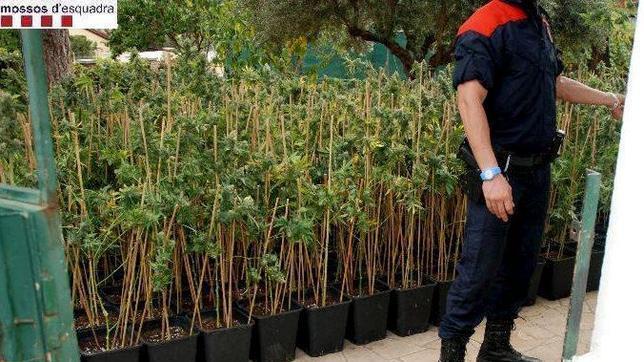El Ayuntamiento de Barcelona ordena el cierre de 49 clubes de cannabis