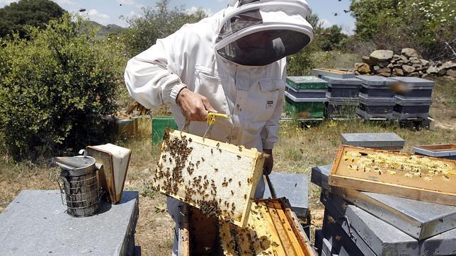 La avispa asiática ha atacado más de 20.000 colmenas de abejas en Galicia