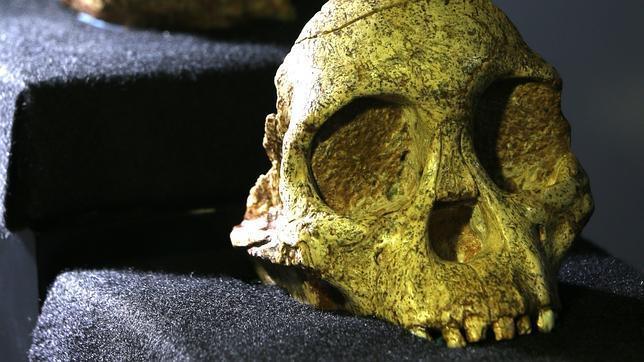 Cráneo del niño de Taung