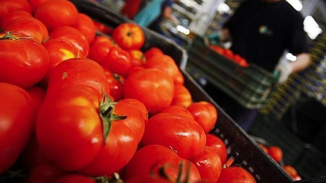 Un estudio ha revelado las bondades del tomate, rico en licopeno, para ayudar a reducir el riesgo de cáncer de próstata