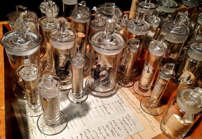 Un museo danés descubre una colección perdida de Darwin