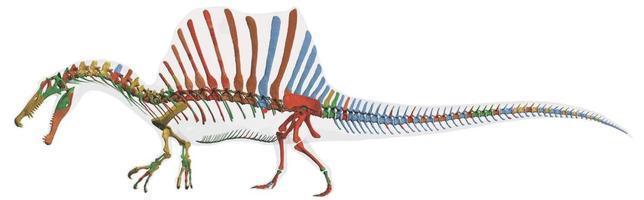 El primer dinosaurio semiacuático, descubierto en Marruecos