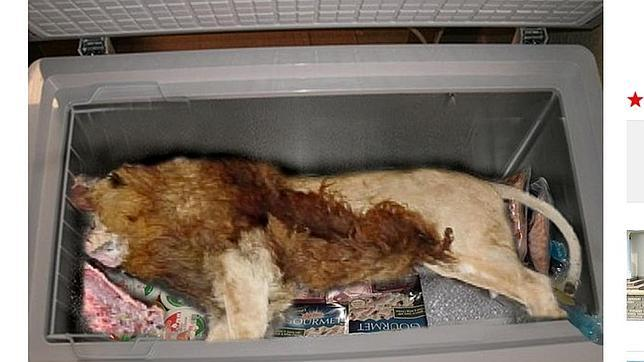Encuentran un león muerto en el congelador de un restaurante de Gran Bretaña