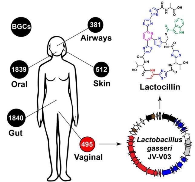 Nuestro organismo, una desconocida fuente de medicamentos