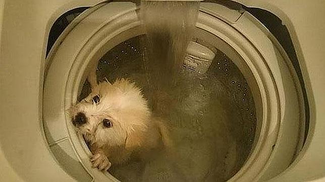 Mata a su perro en la lavadora y bromea: «Una forma ultrarrápida de bañarlo»