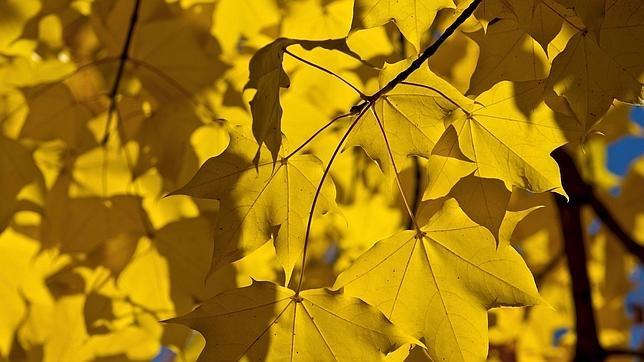 Los rayos del sol se filtranentre las hojas de unos árboles en una tarde otoñal en un parque de Zúrich