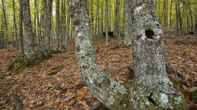 Cuatro bosques de otoño imprescindibles cerca de Madrid