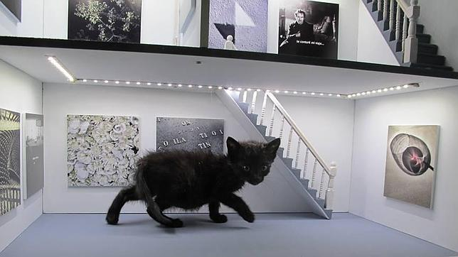 La gata Misha es la protectora de la Fundación Newcastle, por la que marcha tan campante