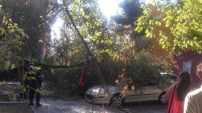 Una gran rama, caída sobre un vehículo en el distrito madrileño de Villaverde
