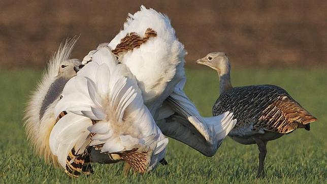 El ave que ingiere veneno por amor Photo_7_Franz_Kovacs--644x362