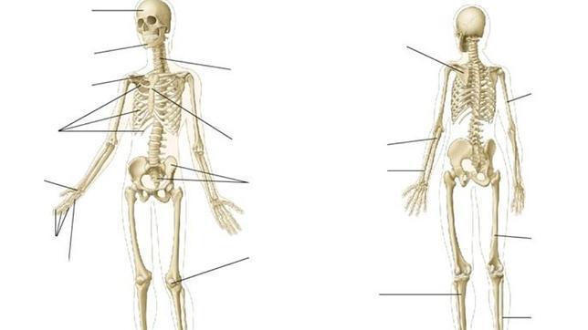 Los huesos del cuerpo - ABC.es