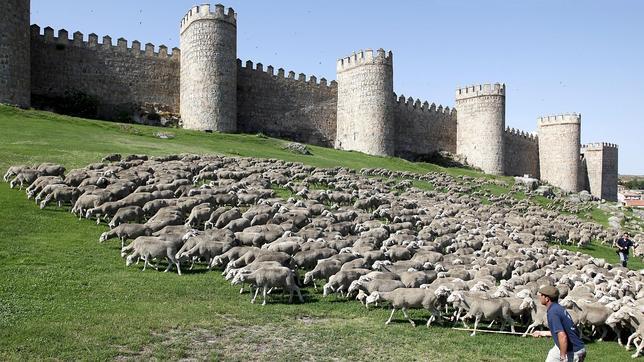 Ovejas a su paso por Ávila