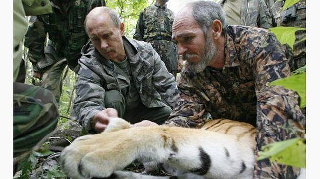 El tigre Ustin