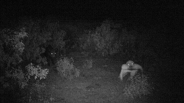 Así es la misteriosa criatura que ha aparecido en una finca de la sierra onubense