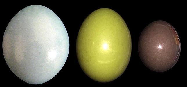 Huevos de distintas especies de tinamú