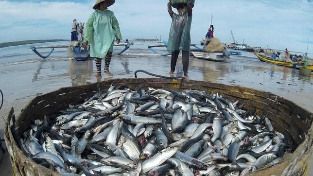 """En 2012 la UE empezó a emitir """"tarjetas amarillas"""" y a imponer sanciones a los estados acusados de no cumplir la normativa sobre pesca ilegal, no declarada y no notificada"""