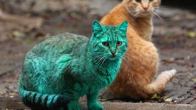 El misterioso gato verde que asombró a una ciudad de Bulgaria