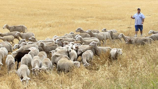 Resuelve el acertijo del pastor