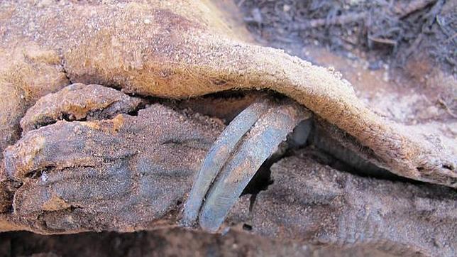 Descubren un gigantesco cementerio en Egipto en el que las momias están divididas según su color de pelo
