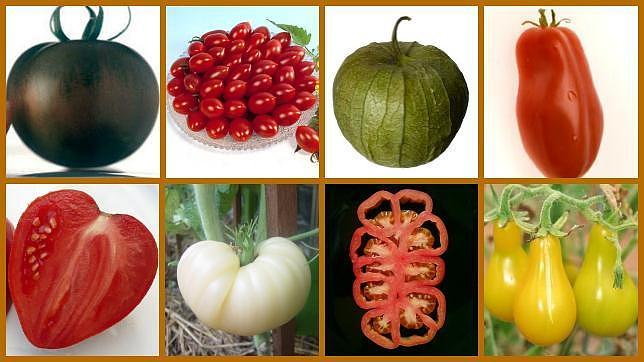 Amarillos, blancos o negros… los tomates más originales del mercado