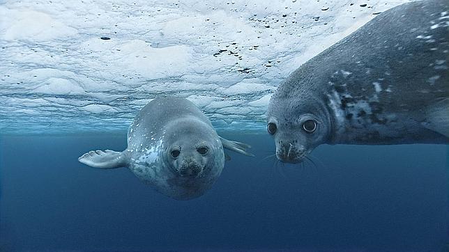El nivel del mar Mediterráneo ha aumentado en más de un milímetro cada año desde 1989