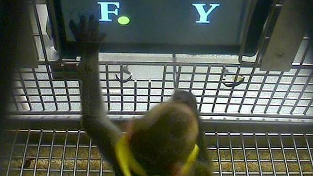 Los monos son capaces de hacer sumas básicas