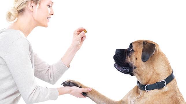 Un perro escucha a su dueño con una atención muy parecida a la humana