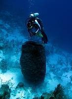 Y la criatura más grande de los océanos es...