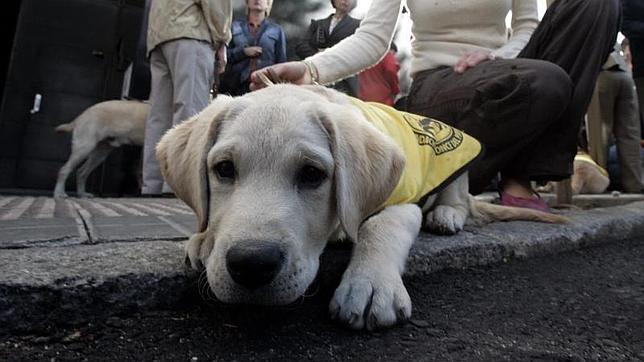 Condenan a una mujer invidente a abonar 28.000 euros a una viandante que tropezó con su perro-guía