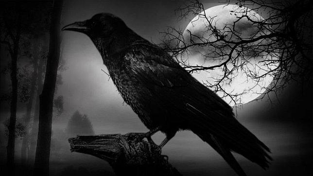 el mal  portamiento de los cuervos es m s mito que realidad