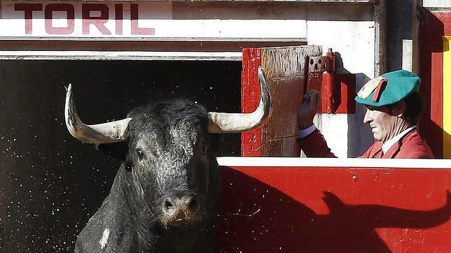Los enemigos de la Tauromaquia también cogen «el toro por los cuernos»