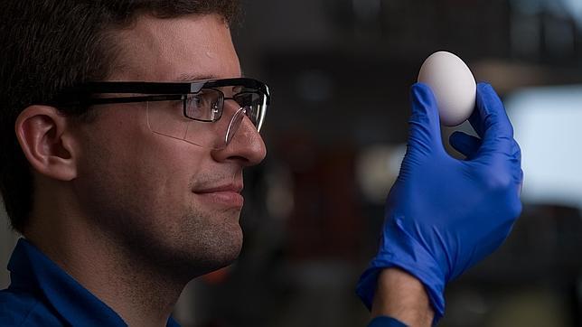 Científicos logran «deshervir» un huevo