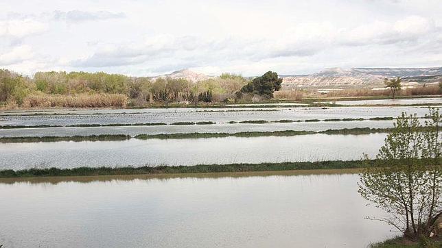 Campos agrícolas convertidos en pantanos por el desbordamiento del Ebro en su tramo aragonés