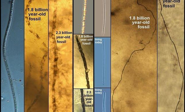 Estos microorganismos marinos no han cambiado durante más de 2.000 millones de años
