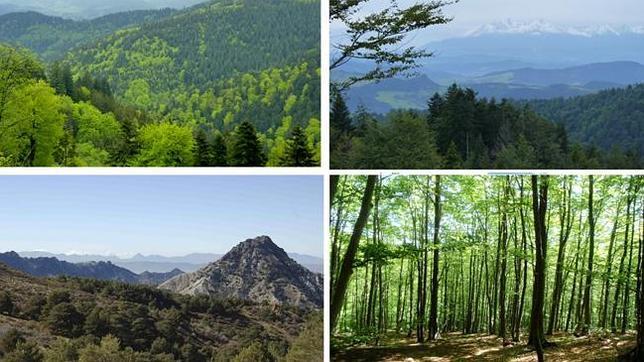 Han comparado la respuesta fisiológica a años secos en 160 áreas forestales que representan cinco tipos diferentes de bosques