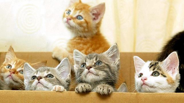 Gatos en una caja