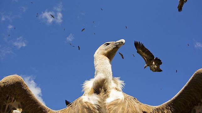 Imagen ganadora en FOTOFIO 2014 en la categoría «Aves de España»