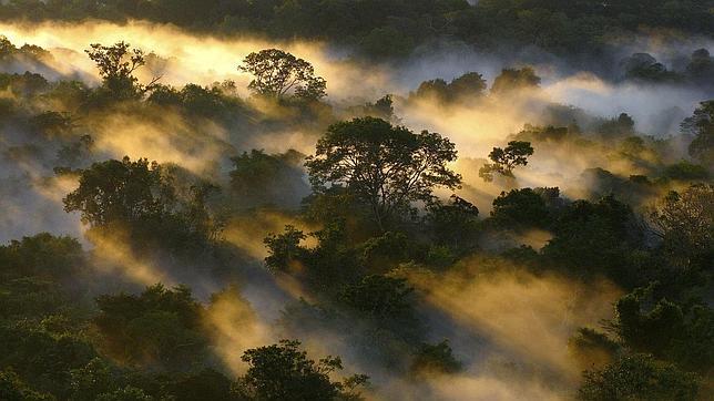 Arrestan en Brasil al «mayor deforestador» de la selva amazónica