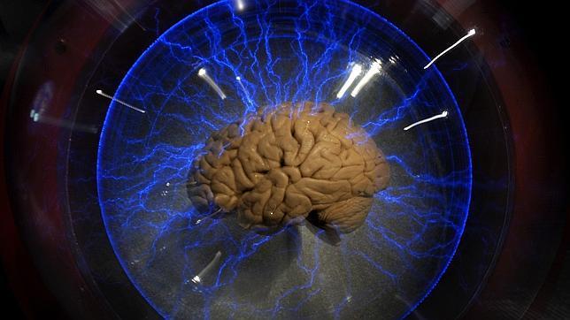 Un cerebro real en una exposición en Brasil