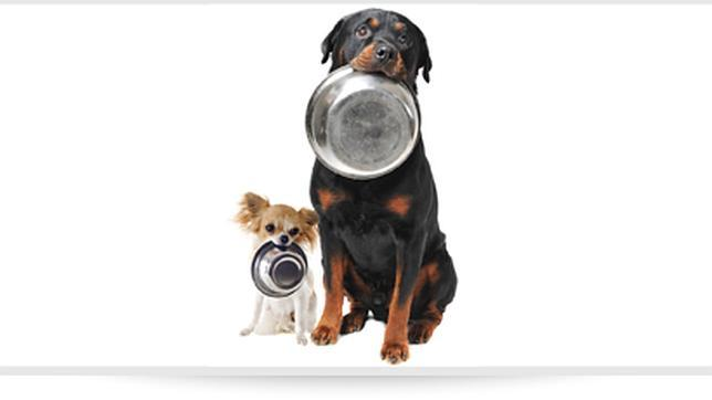 La alimentación de las mascotas se convierte en una tarea sencilla si se siguen unas pautas muy prácticas