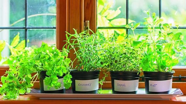 Trucos infalibles para tener un huerto en el sal n de tu casa for Plantas beneficiosas para el huerto