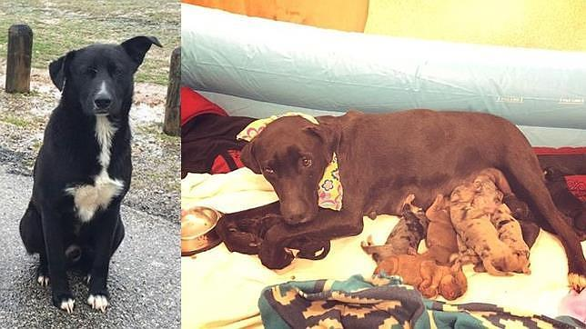 El perro abandonado que salvó la vida a diez cachorros