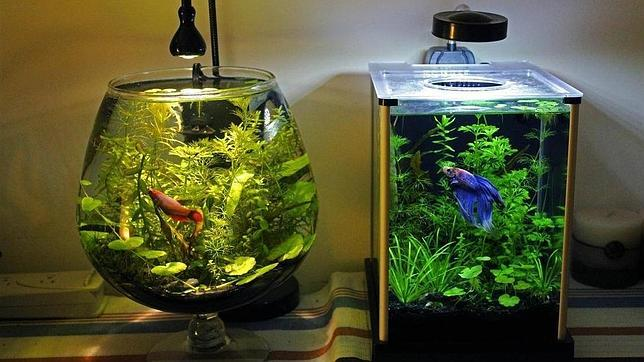 Acuario unas mascotas diferentes for Fuentes con peces