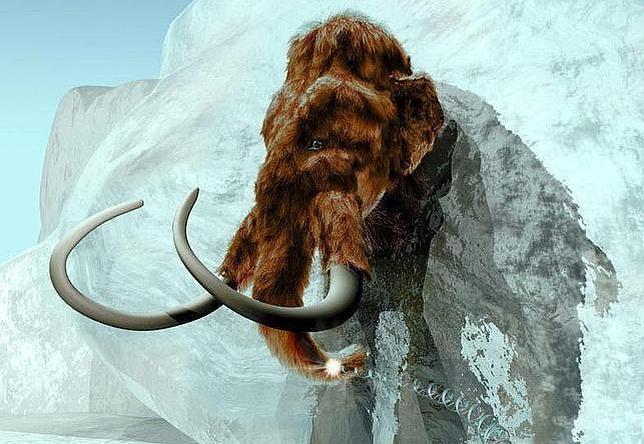 El ADN del mamut lanudo se ha encontrado intacto en ejemplares congelados en Siberia