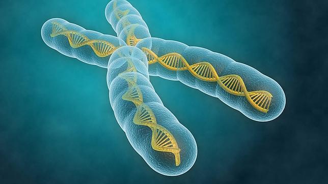 La historia genética más larga jamás contada