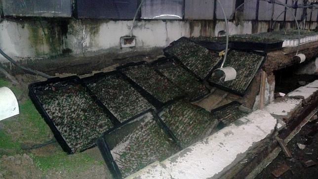 Viveros en ruina en la casa de campo for Viveros en navarra