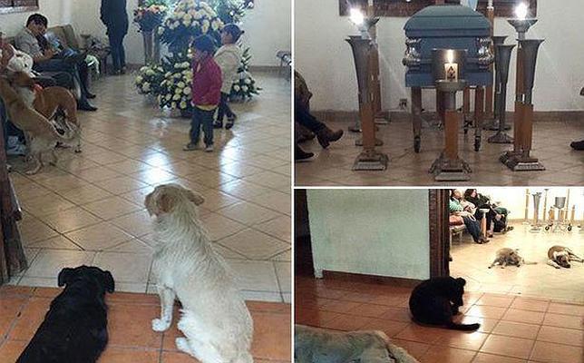 Los perros callejeros que se presentaron en el funeral de la mujer que les cuidaba