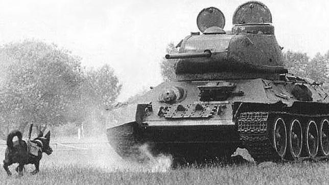 Un perro-mina se dirige hacia un carro de combate durante un entrenamiento